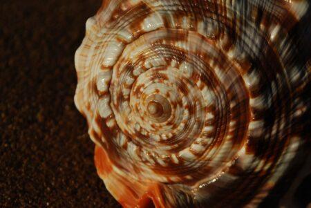 Fibonacci 3858696 1280 1